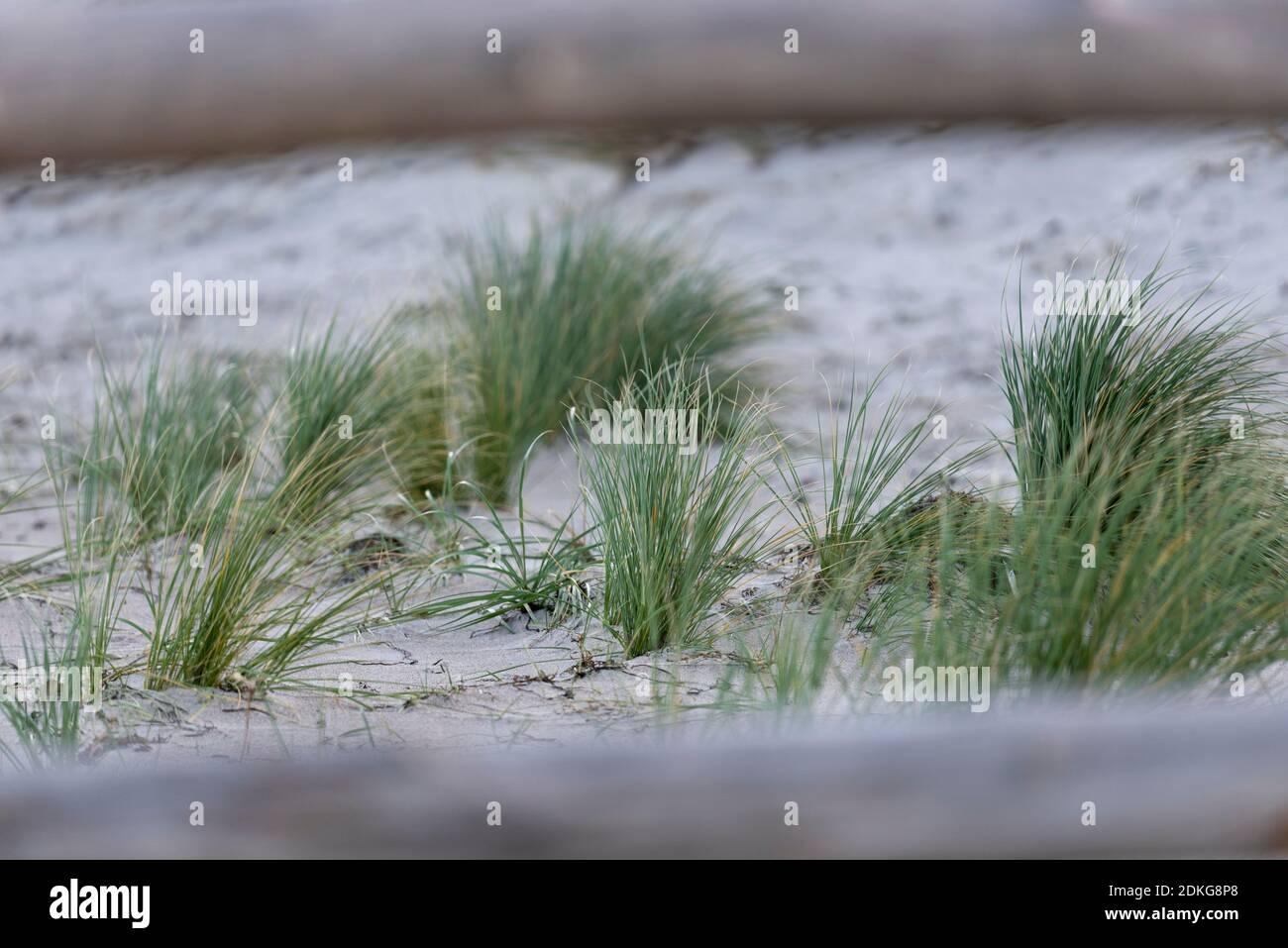 Dune, Stradhafer, mer Baltique Banque D'Images