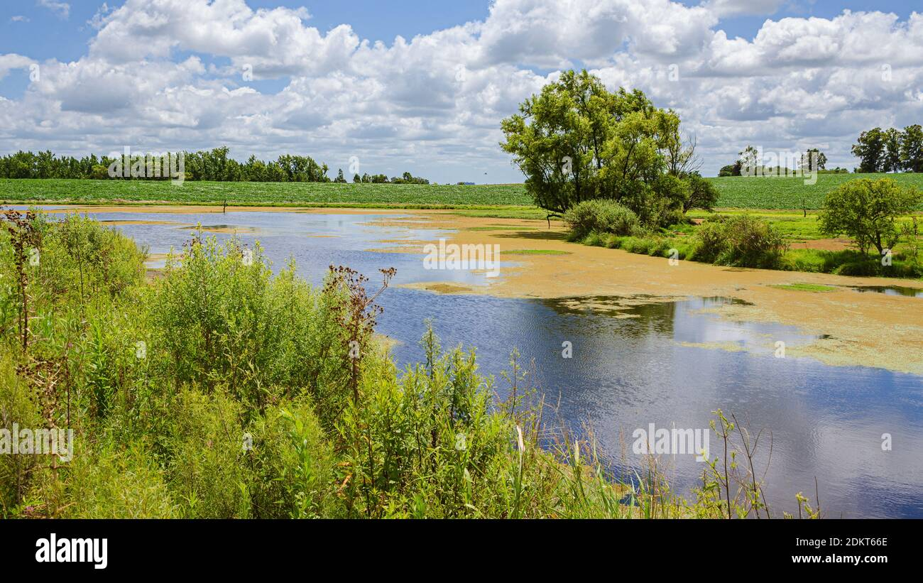 Lac en Uruguay. Paysage dans le champ Banque D'Images