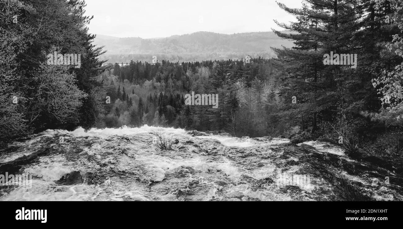 Vue panoramique de la rivière qui coule à travers la forêt Banque D'Images