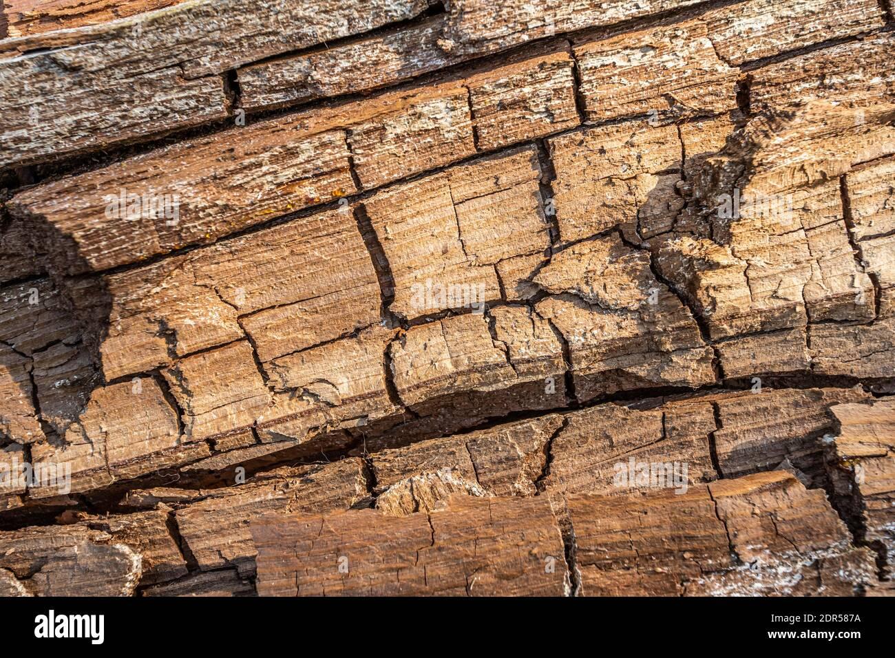 Vieux bois pourri avec fissures et champignon spore. Moule blanc sur une planche en bois. Motif de moisissure sur le bois, l'arrière-plan ou la texture. Banque D'Images