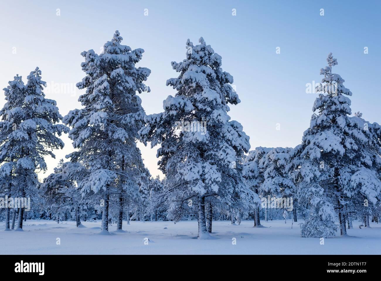 Arbres couverts de neige sur terrain Against Sky Banque D'Images