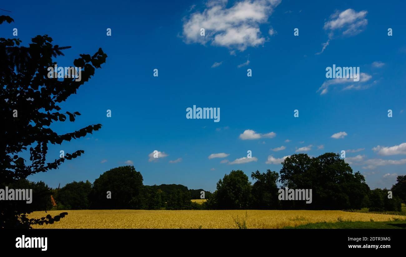 Low Angle View d'arbres sur terrain Against Sky Banque D'Images