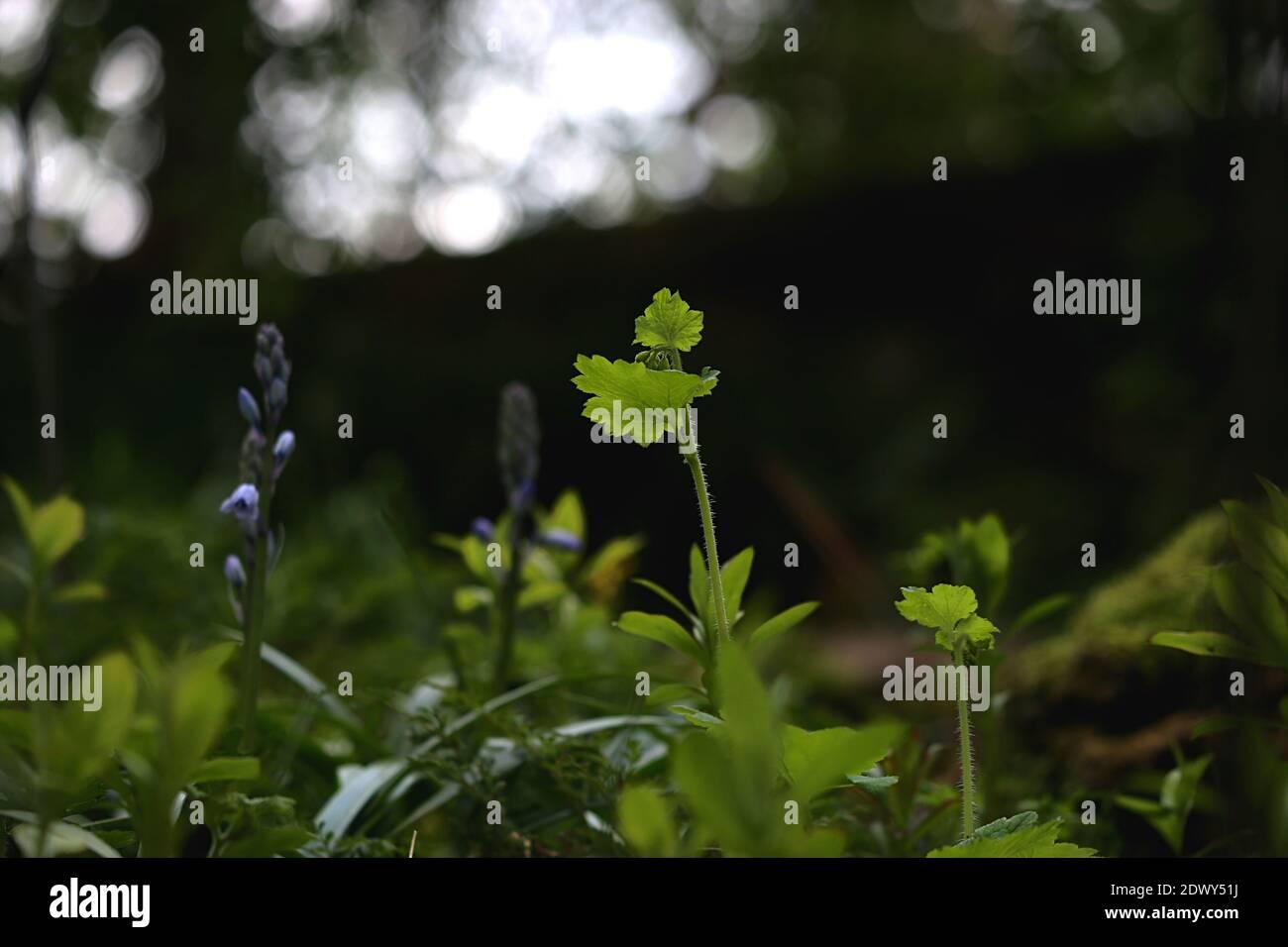Close-up de plante sur terrain Banque D'Images