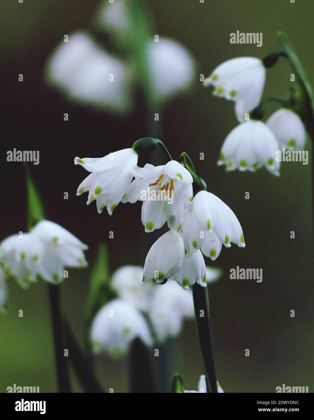 Close-up de plante à fleurs blanches Banque D'Images