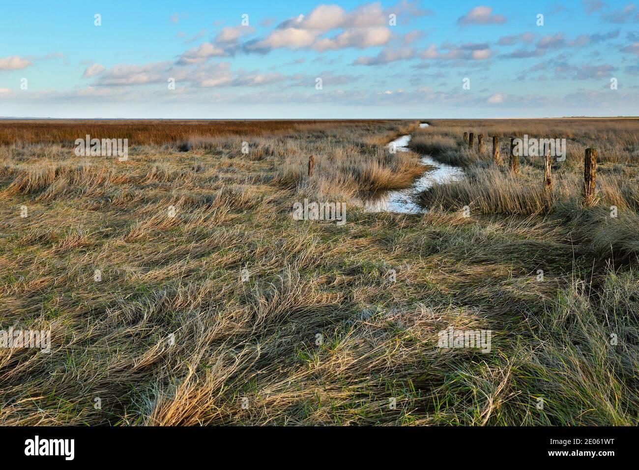 Un marais salé dans la Basse-Saxe de la mer de Wadden, Allemagne. Les clôtures et le fossé sont caractéristiques des marais salants de la mer du Nord. Banque D'Images