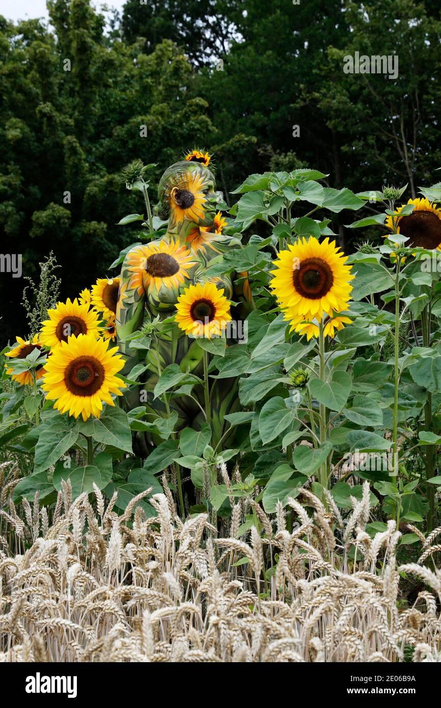 Nature Art: Tournesols bodypainting et photoshooting avec le modèle Darky dans un champ de cueillette de fleurs à Behrensen, le 01 août 2020 - Bodypainting artiste: Joerg Duesterwald Banque D'Images