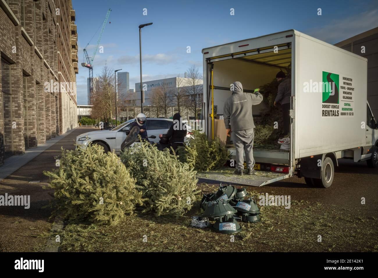 Les arbres de Noël rejetés sont récoltés près de Canada Water, dans le sud-est de Londres, au Royaume-Uni. Banque D'Images