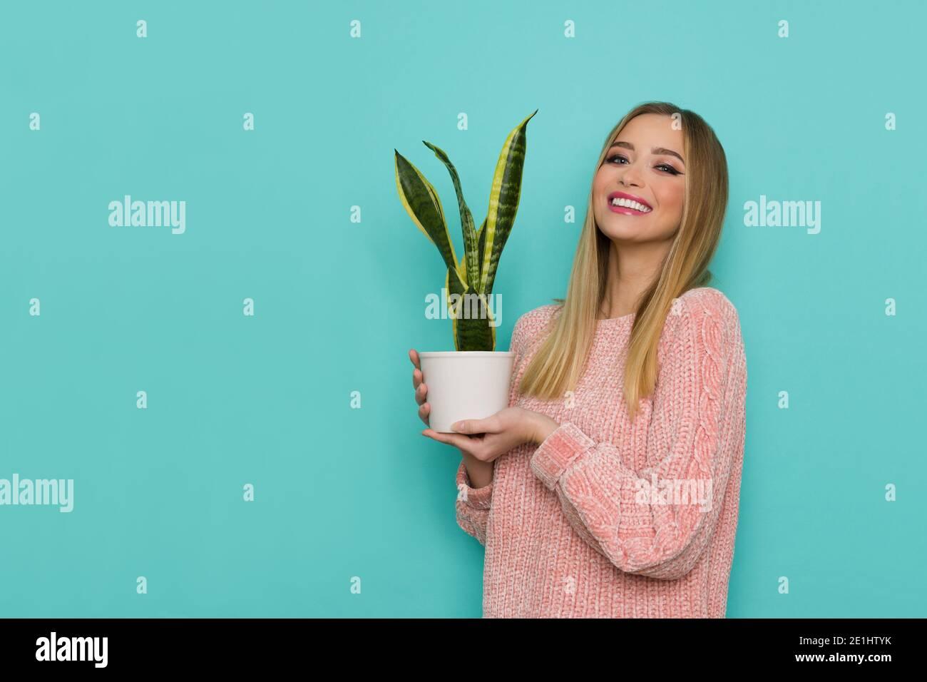 Souriant belle jeune femme en chandail rose pose avec une plante dans pot blanc. Taille haute studio tourné sur fond turquoise. Banque D'Images