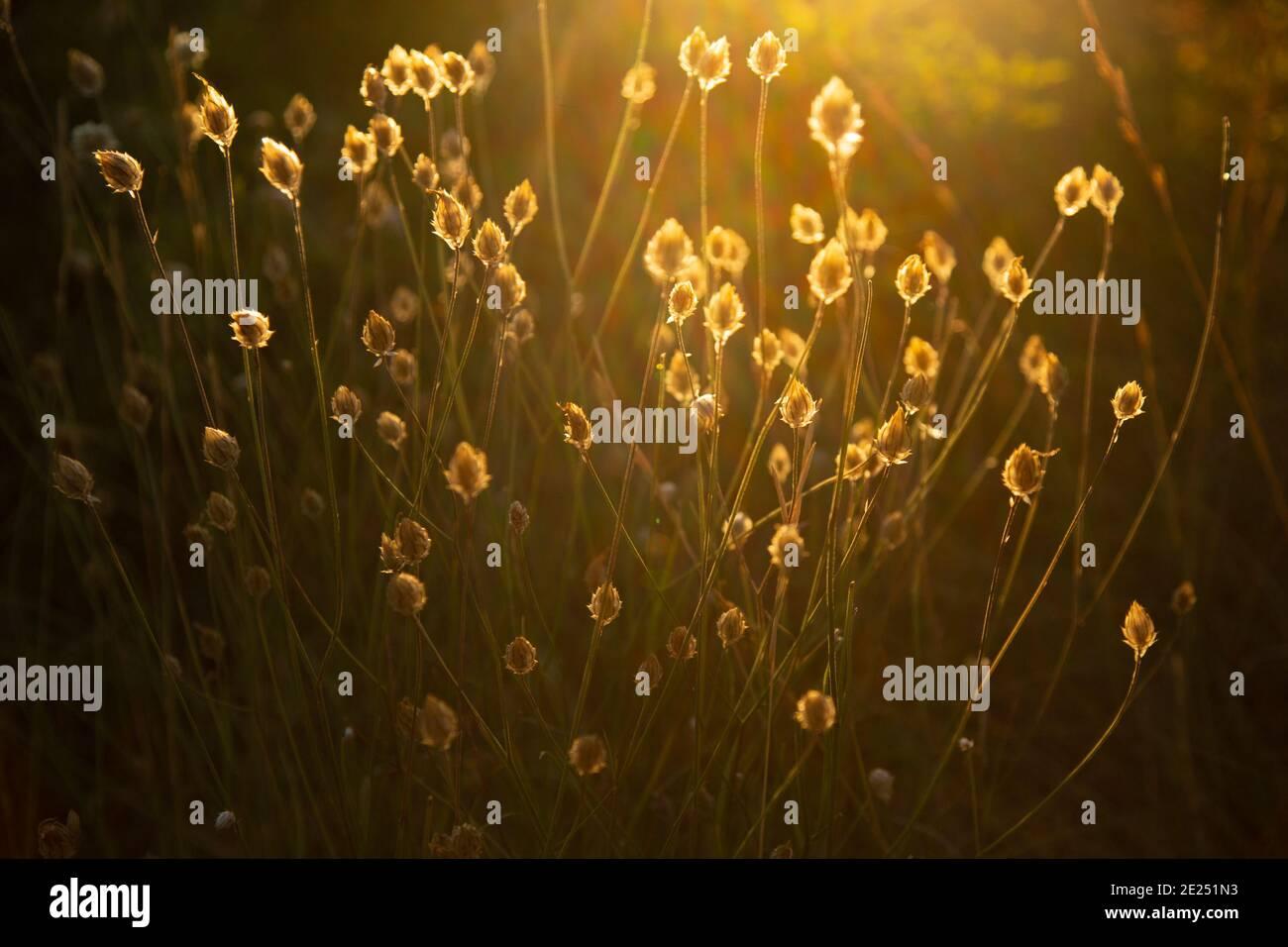 Magnifiques fleurs sauvages mises en valeur par le soleil d'été Banque D'Images