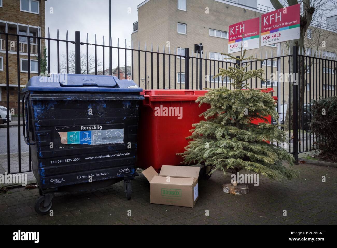 Londres, Royaume-Uni. 12 janvier 2021. Un arbre de Noël est déversé pour collecte à Deptford. Credit: Guy Corbishley/Alamy Live News Banque D'Images