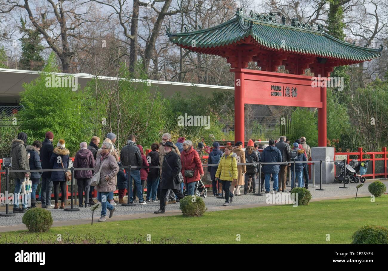 Berlin, 31.01.2020: Der zweite Tag an dem die Panda-Zwillinge Meng Xiang und Meng Yuan alias Pit und Paule mit ihrer Mutter Meng für Besucher zu Banque D'Images