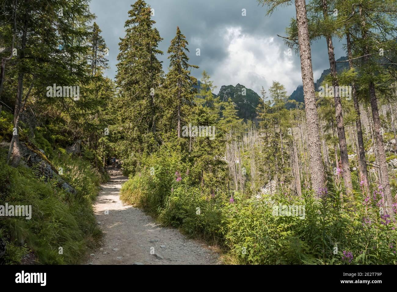 Sentier de randonnée Rocky à Studena dolina, parc national des Hautes Tatras, Slovaquie, Europe, ciel nuageux. Banque D'Images
