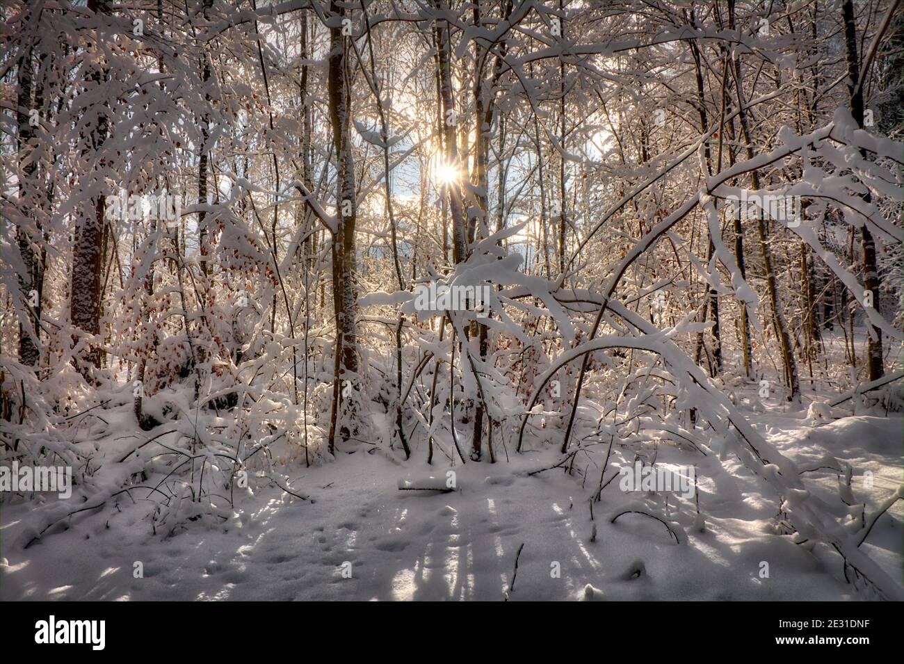 DE - BAVIÈRE: Scène d'hiver dans les bois de Pfannenholz près de Bad Toelz Banque D'Images