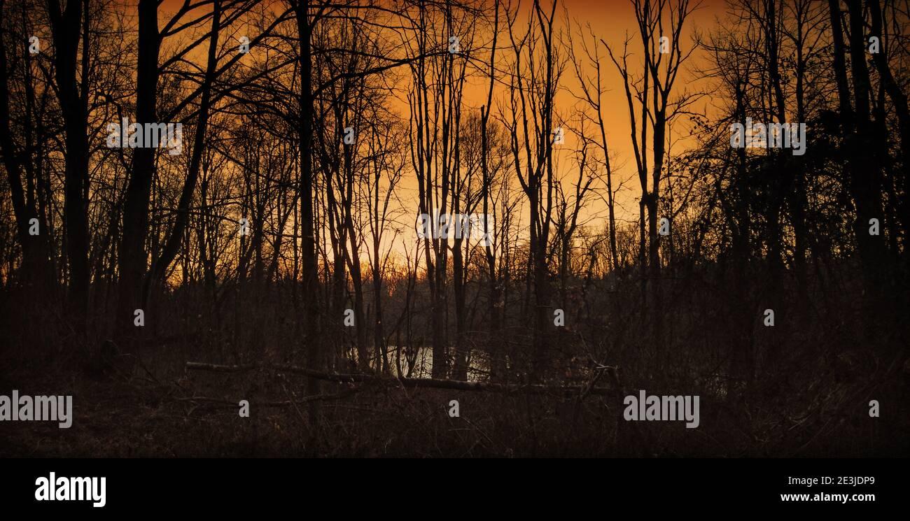 magnifique coucher de soleil rouge derrière les arbres avec réflexion sur un petit lac Banque D'Images