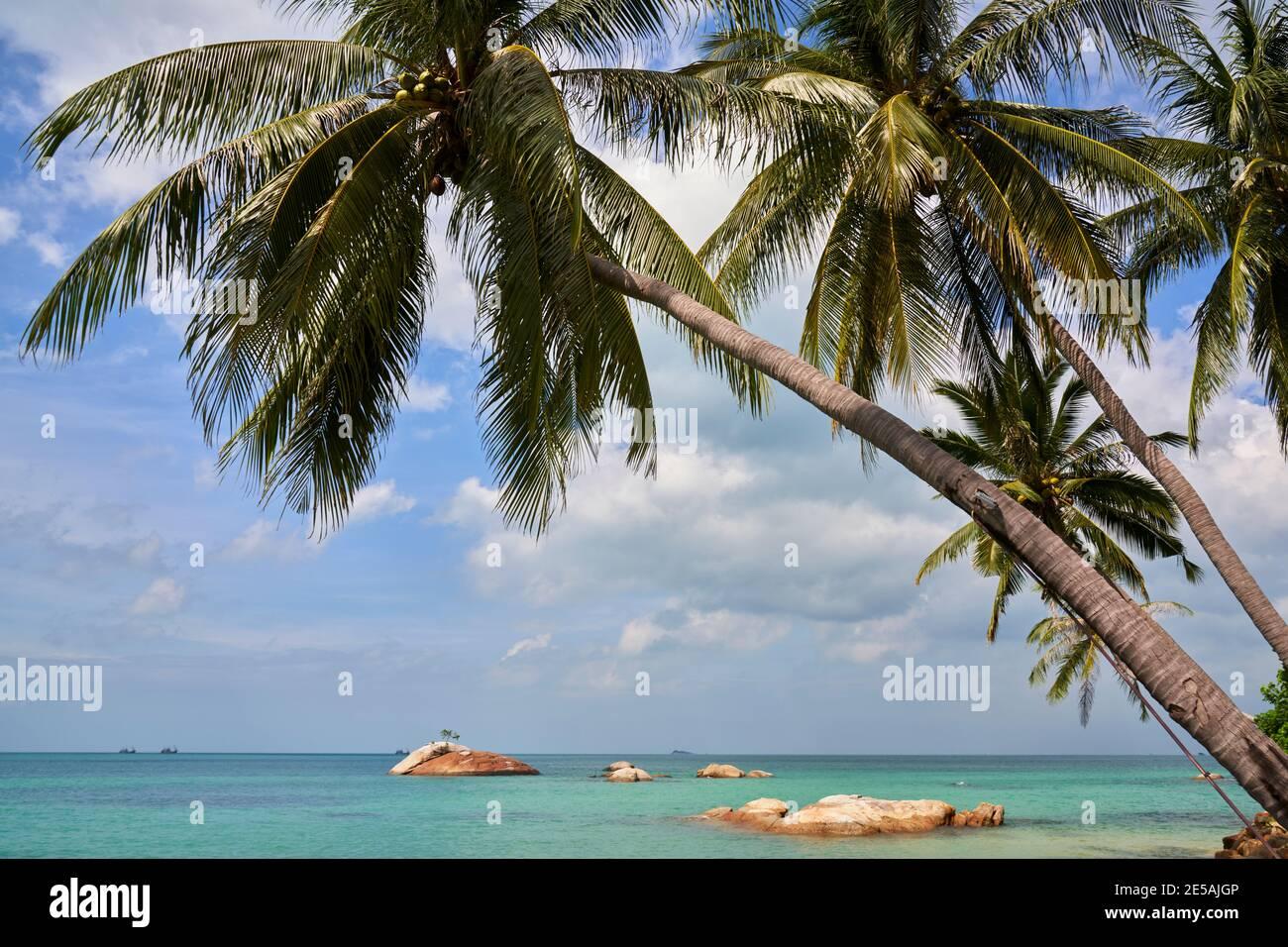 Île tropicale avec vue sur le golfe de Thaïlande à travers les cocotiers. Banque D'Images
