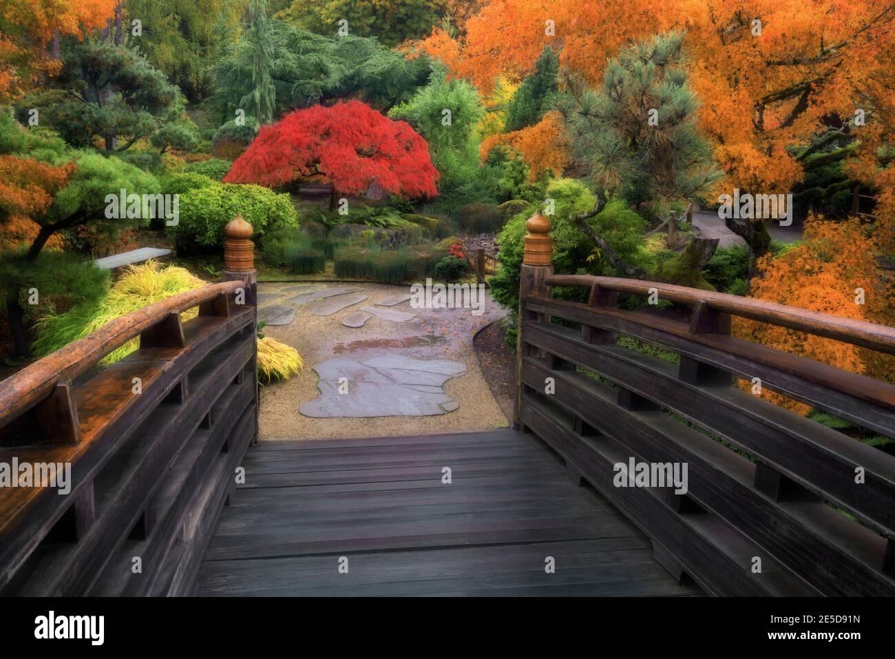 Le pont de la Lune se connecte au jardin japonais de l'île de Tsuru et aux couleurs éclatantes de l'automne lors de cette matinée brumeuse à Gresham, Oregon. Banque D'Images