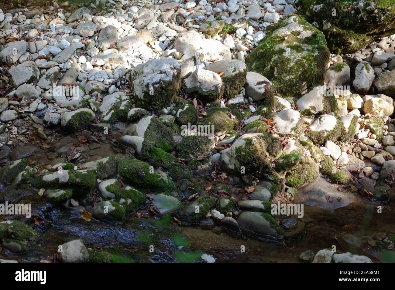 pierres blanches recouvertes de mousse Banque D'Images