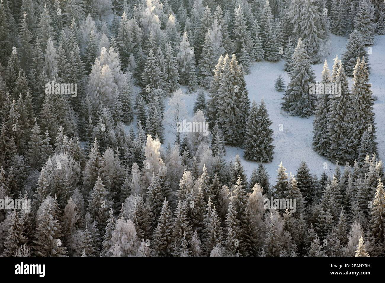 Arbres couverts de givre et de neige dans les montagnes d'hiver - Arrière-plan de Noël Banque D'Images