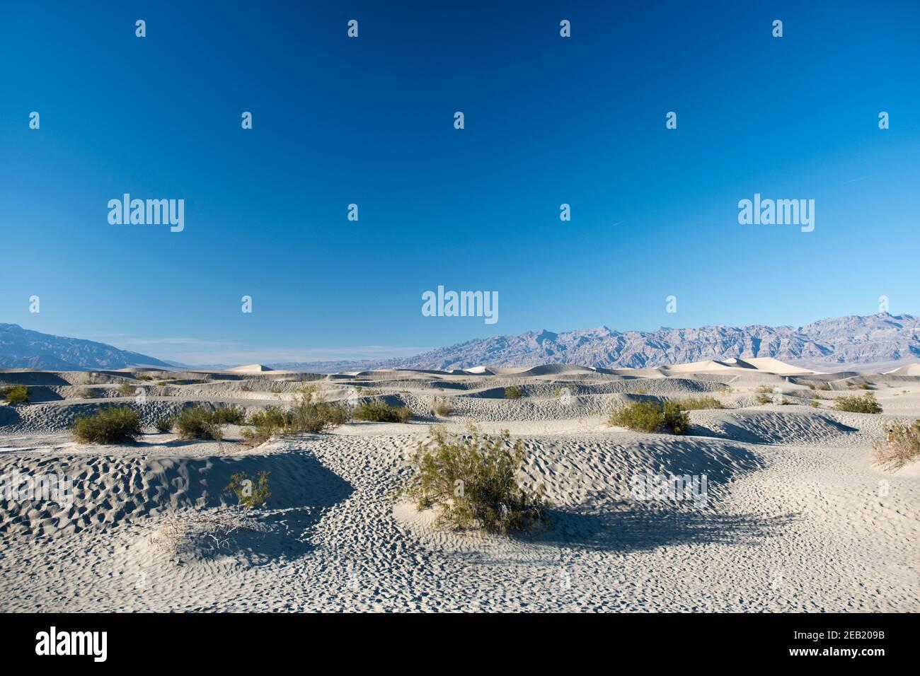 Les dunes de sable de Mesquite Flats, à l'extrémité nord du parc national de la vallée de la mort, en Californie. Banque D'Images