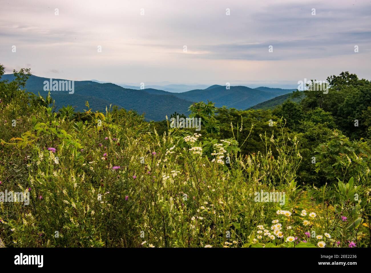 Les montagnes Blue Ridge, vues depuis Skyline Drive dans le parc national Shenandoah. Banque D'Images