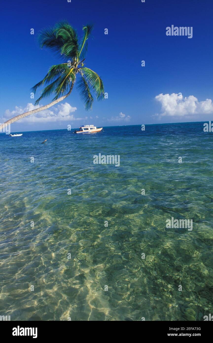 Palmier au-dessus de la mer, Caraïbes Banque D'Images