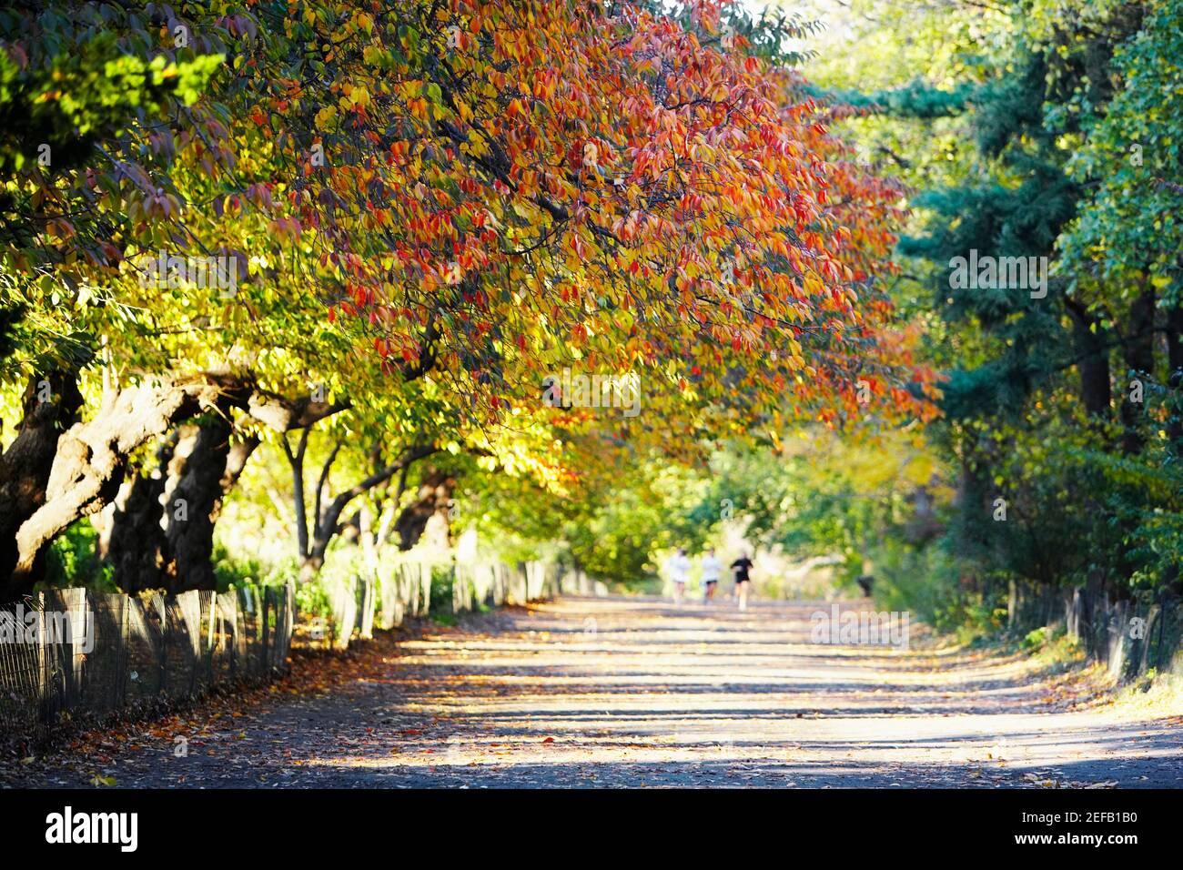 Arbres le long d'une route, Central Park, Manhattan, New York City, New York State, ÉTATS-UNIS Banque D'Images