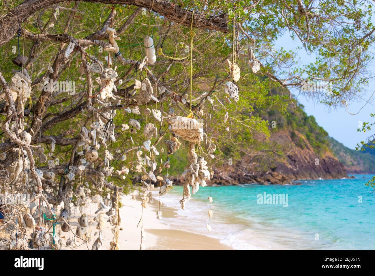 Arbre de souhaits. Coraux suspendus à un arbre, attachés par des cordes, sur une côte tropicale en Thaïlande. Banque D'Images