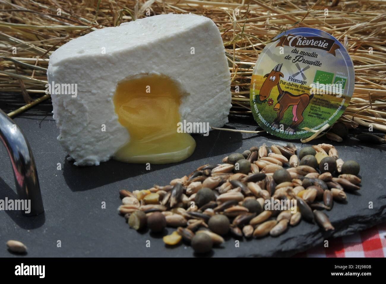Élevage de chèvres et production de produits biologiques à partir de lait de chèvre Banque D'Images