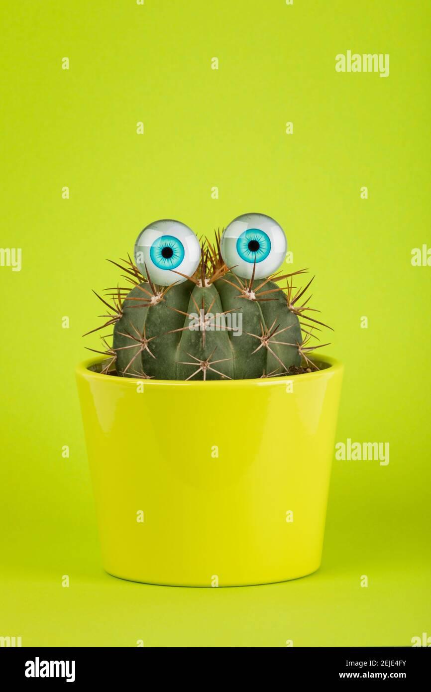 Cactus en pot avec les yeux de la poupée sur fond vert Banque D'Images