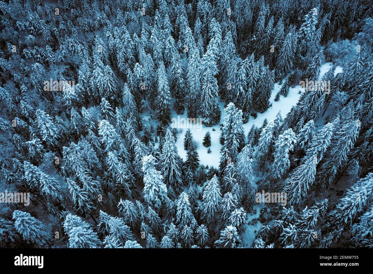 Une drone aérienne survole l'épinette d'hiver et la forêt de pins. Sapins dans la vallée des montagnes couverts de neige. Photographie de paysage Banque D'Images