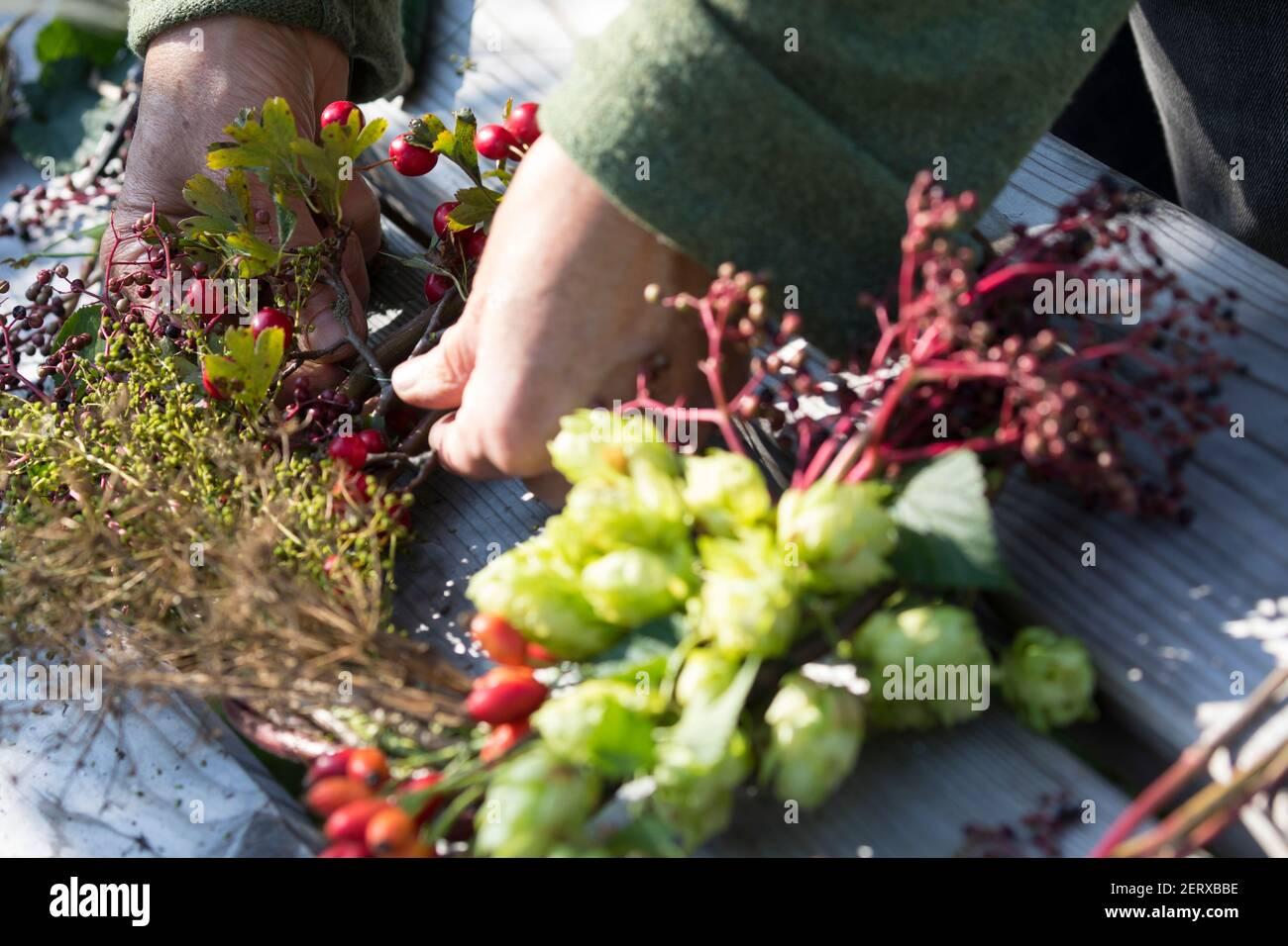 Herbstkranz, Herbst-Kranz, Reifekranz, herbstlich, Kranz, Erntedank, Erntedank-Kranz, Kranz aus Früchten, Samenständen, Ranken und dergleichen, bâtel Banque D'Images