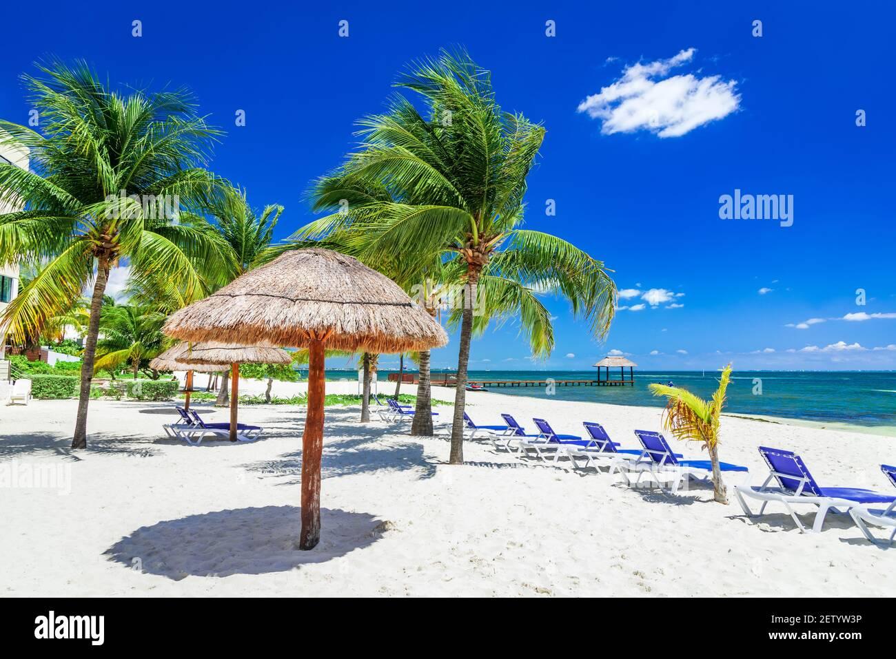 Cancun, Mexique - Paysage tropical avec des cocotiers palmiers Caraïbes plage Yucatan Peninsula en Amérique centrale Banque D'Images