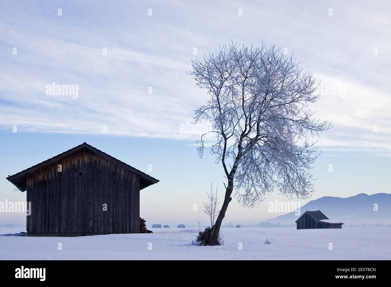Lever de soleil givré et brumeux sur le plateau alpin, Kochelsee, Bavière forte gelée dans les arbres, lever de soleil givré et brumeux dans la ba Banque D'Images