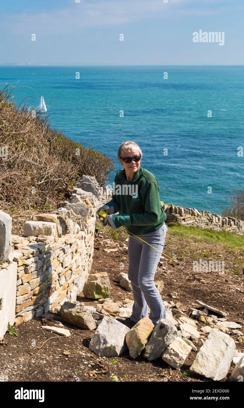 Femme volontaire reconstruisant le mur de pierre sèche à Durlston Country Park tandis que le voilier passe au loin, Swanage, Dorset UK en avril Banque D'Images