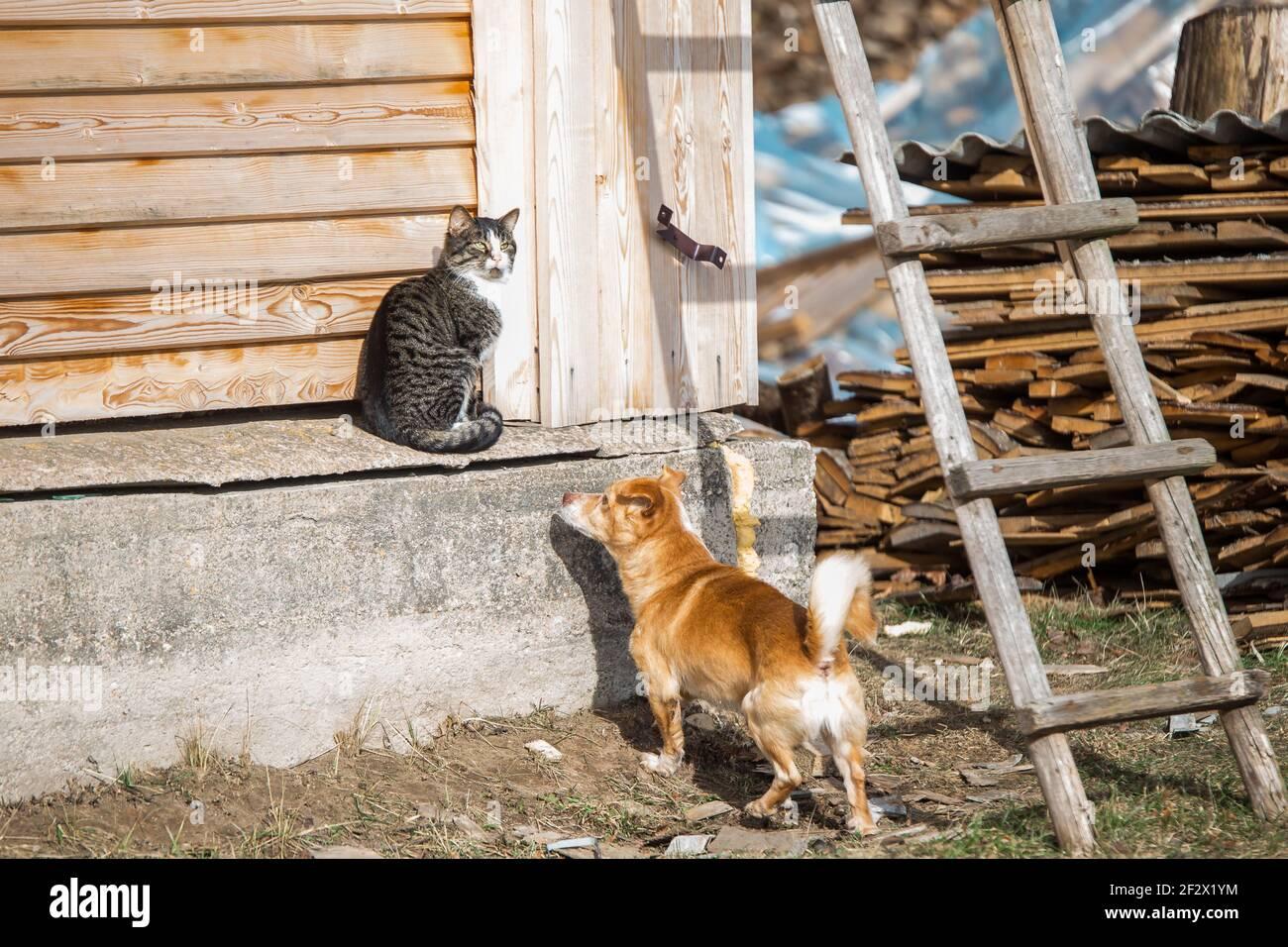Une belle photo d'un chat et d'un chien moelleux jouant par temps ensoleillé Banque D'Images