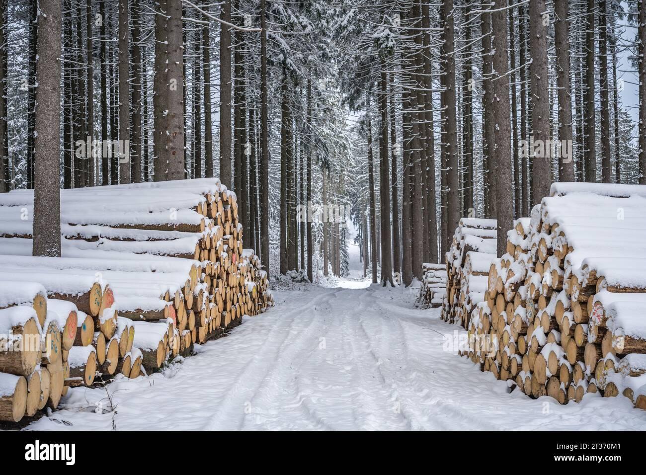 Un tas de bois recouvert de neige. Manteau d'hiver, chemin forestier et pile de bois de conifères à côté. Saison hiver. Se concentrer principalement sur le premier plan. Banque D'Images