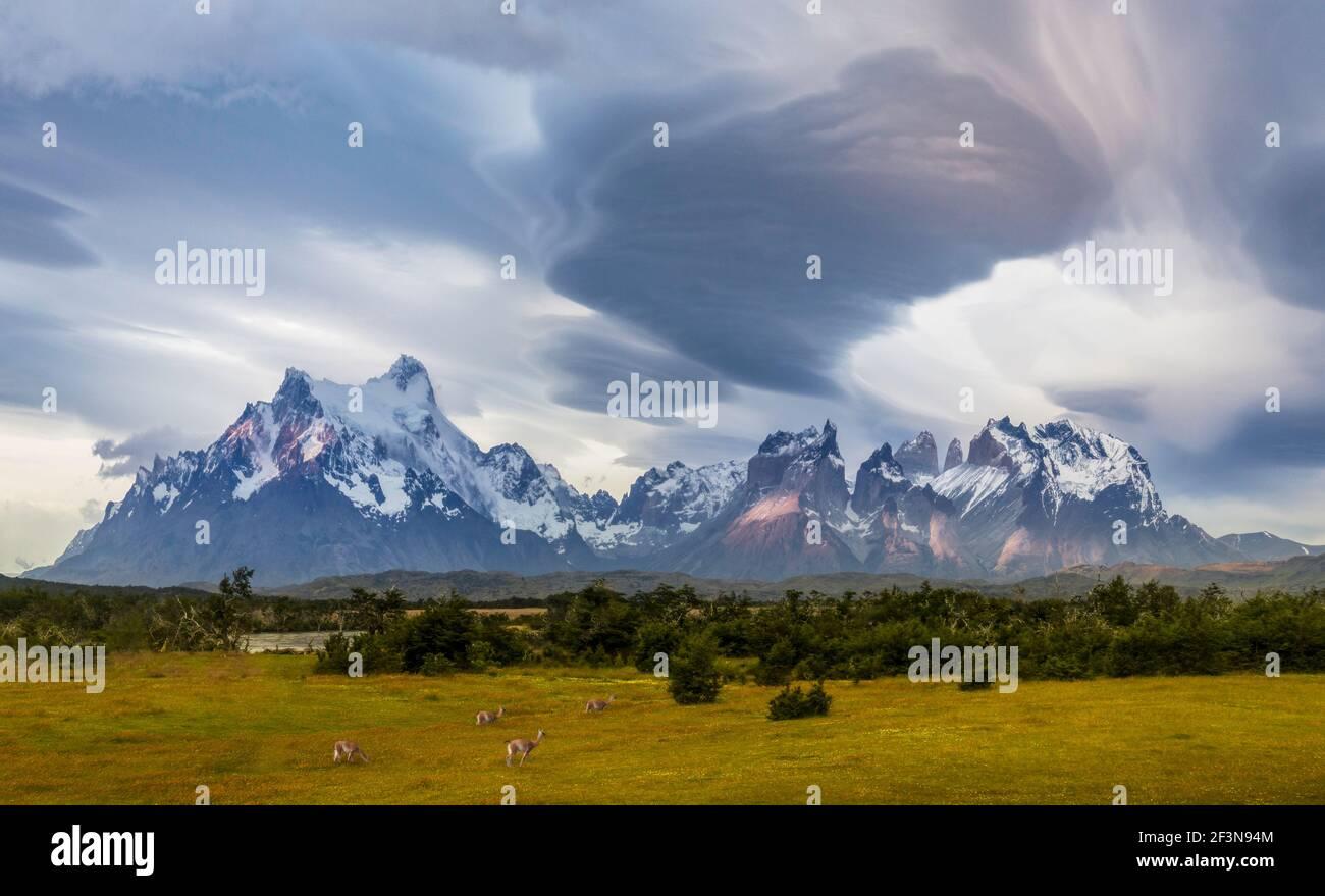Guanacos paissant devant la chaîne de montagnes Torres Del Paine avec nuages lenticulaires Banque D'Images