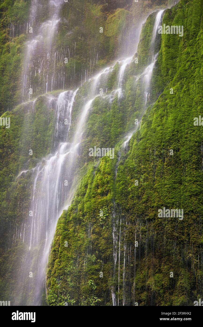 Cascade saisonnière le long du ruisseau Tanner de l'Oregon. Banque D'Images