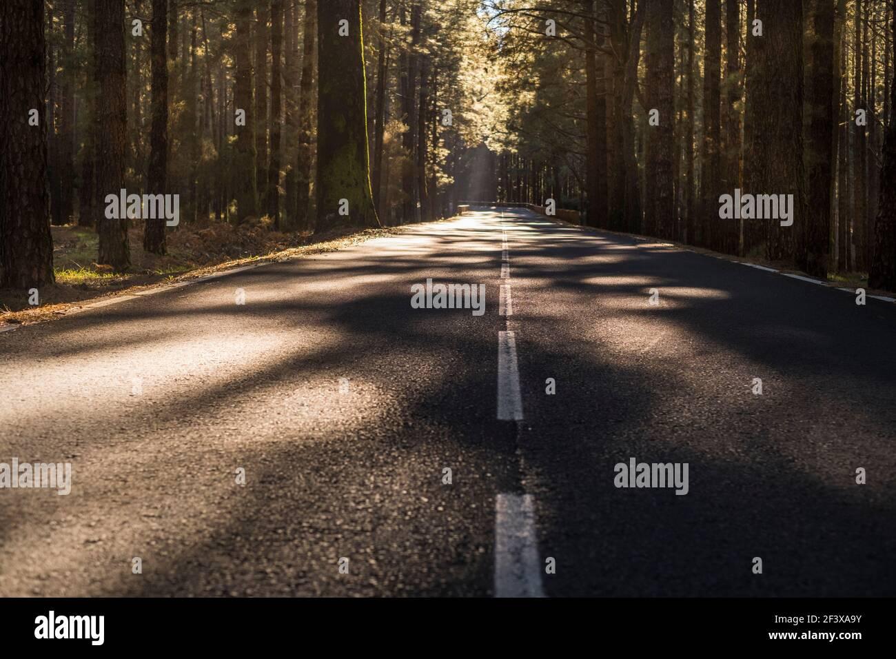 Rue à travers les bois - une route vide calme passant à travers la forêt pleine de beaux arbres - pas de circulation et concept de transport de voyage dans le paysage natu Banque D'Images