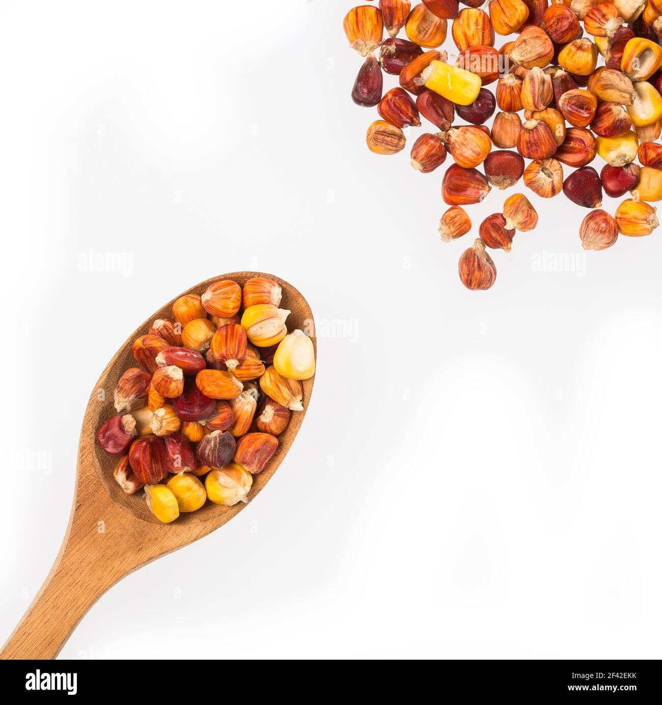 Variété de maïs créole de la région colombienne des Caraïbes - Zea mays Banque D'Images
