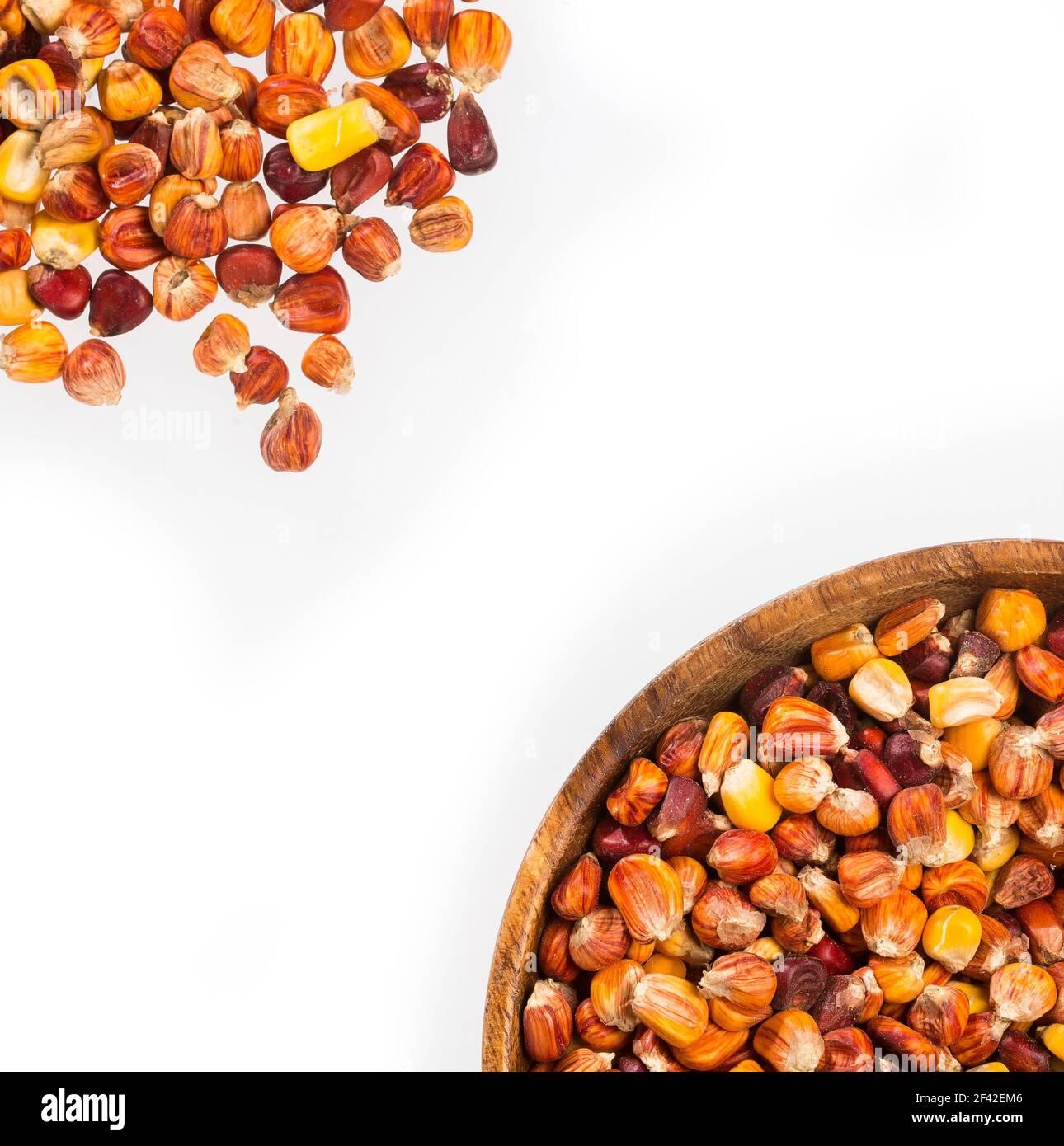 Zea mays - variété de maïs créole de la Colombie Région des Caraïbes Banque D'Images