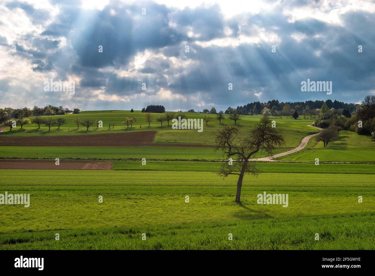 Paysage de printemps. Champ vert et ciel bleu spectaculaire avec rayons du soleil Banque D'Images
