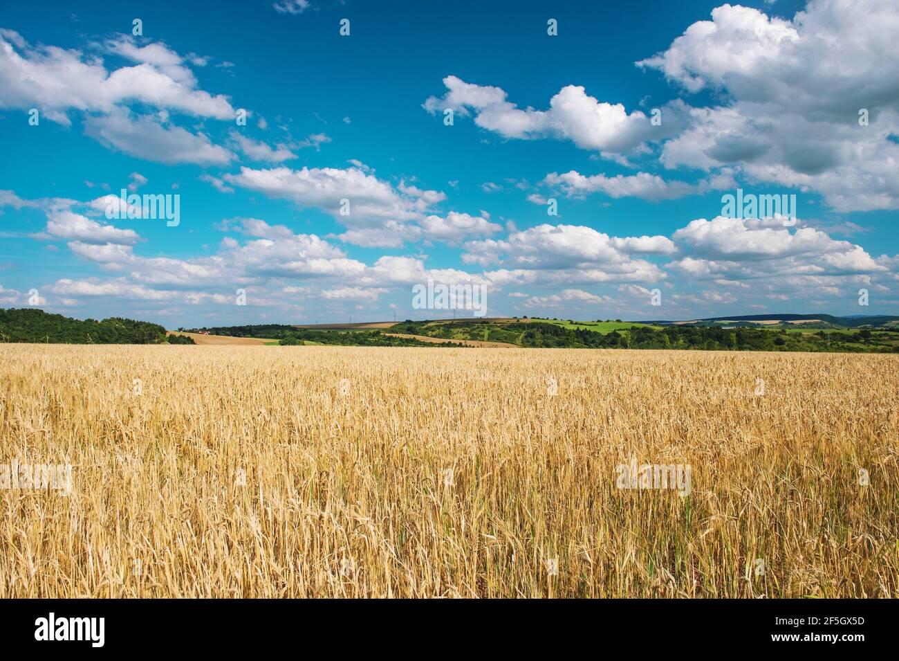 Paysage d'automne avec champ de blé et ciel bleu Banque D'Images