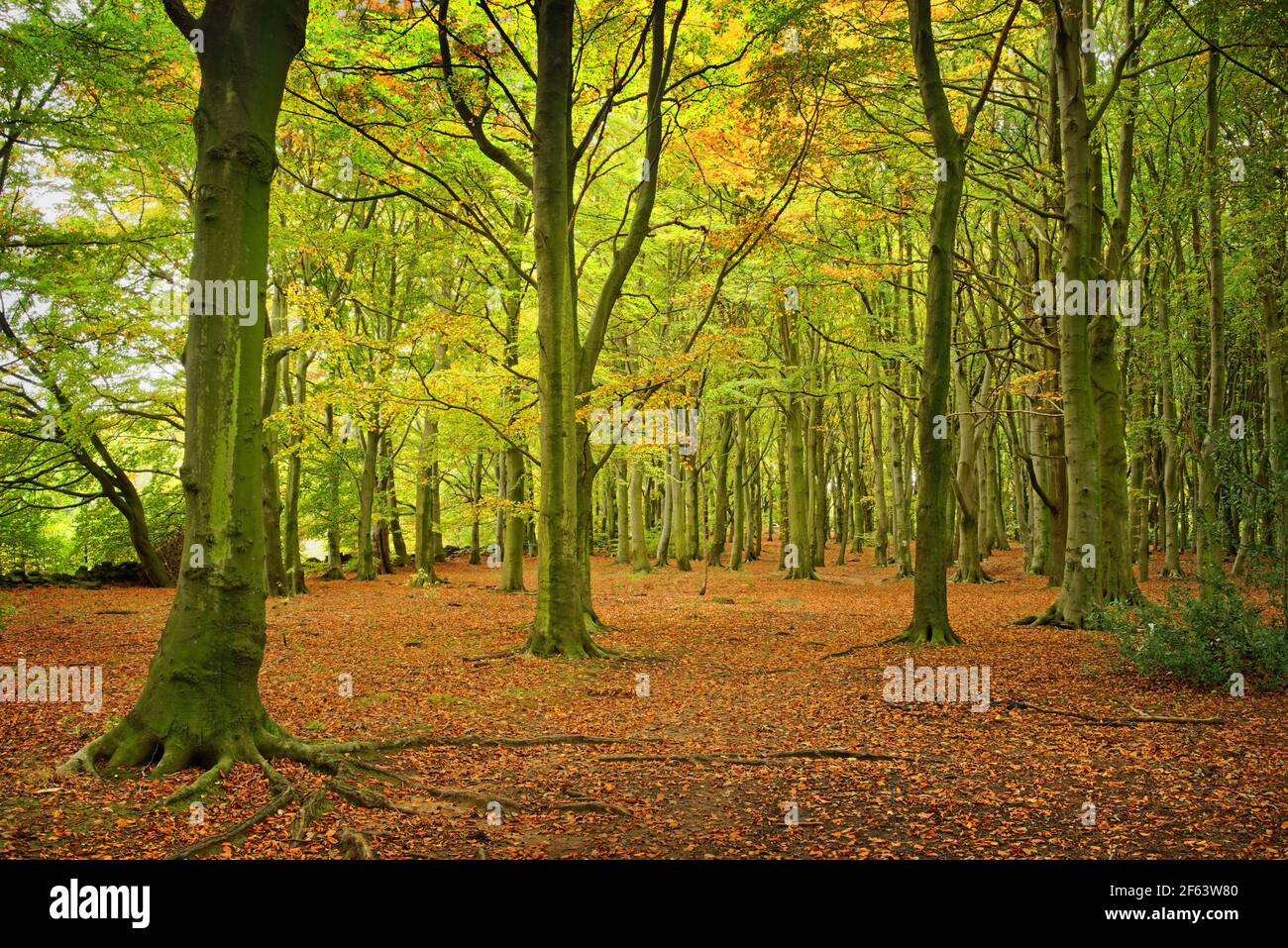 Royaume-Uni, Yorkshire du Sud, Barnsley, Wombwell Wood Banque D'Images