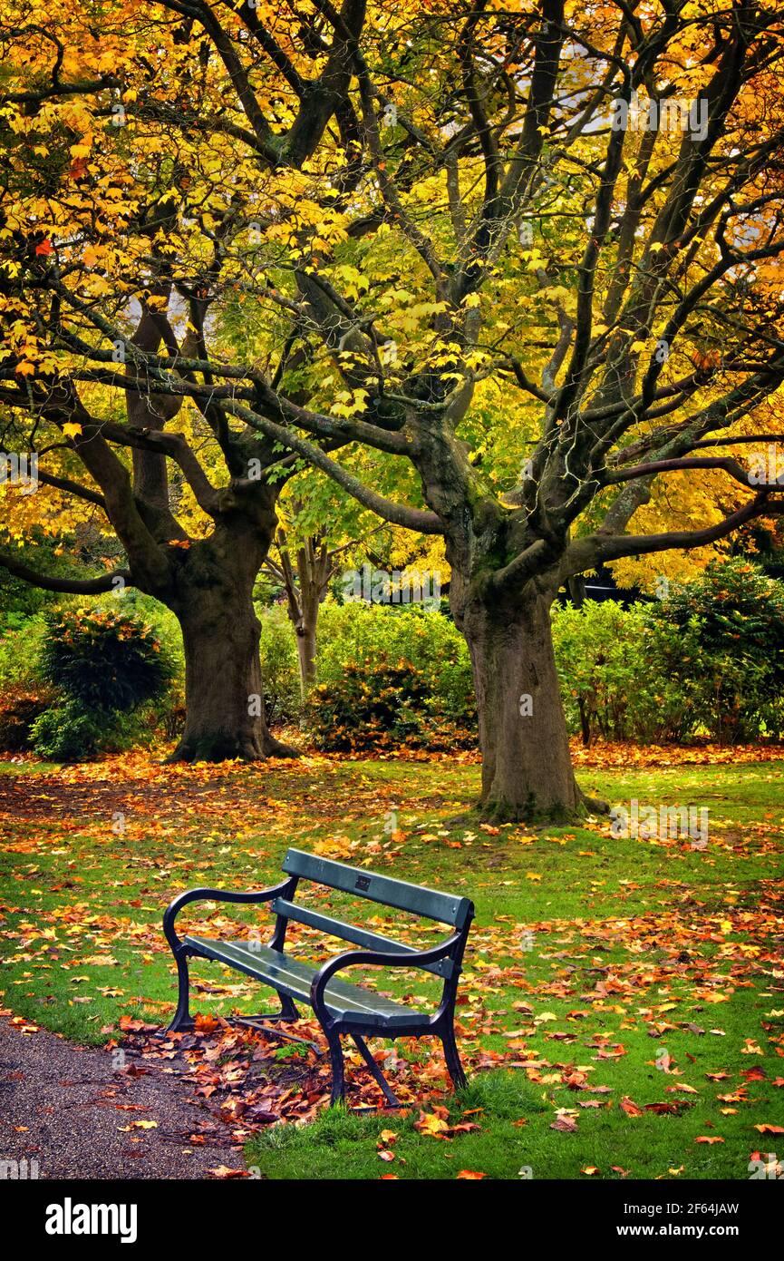 UK,South Yorkshire,Sheffield,Botanical Gardens Banque D'Images