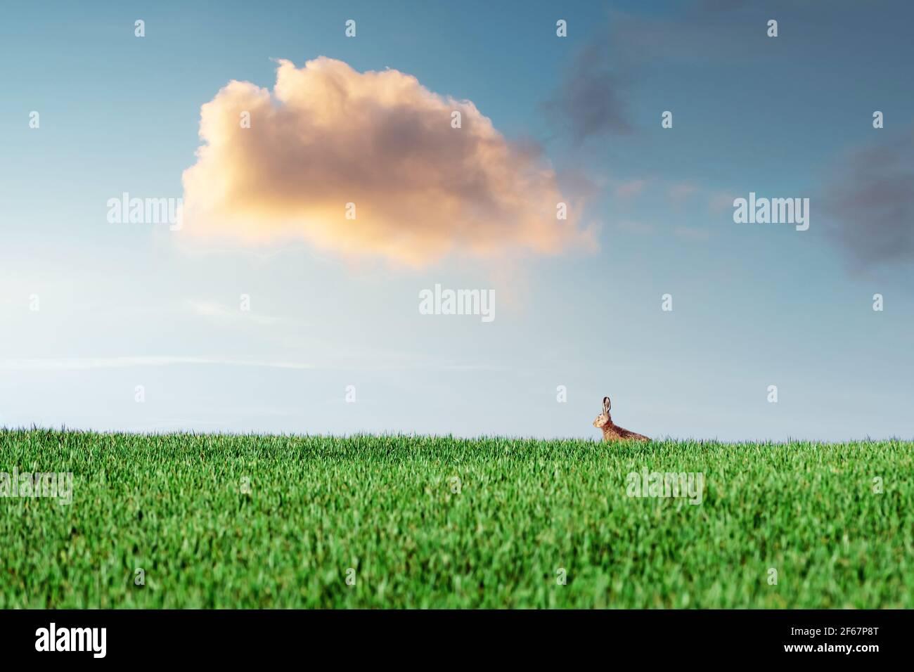 Petit lièvre gris de lapin dans l'herbe verte Banque D'Images
