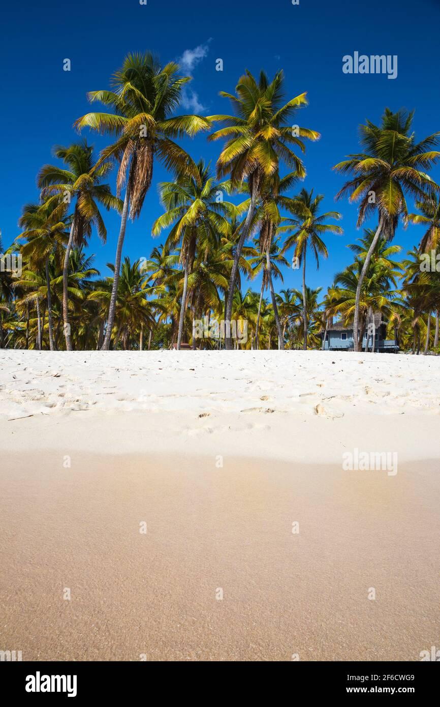République dominicaine, Punta Cana, Parque Nacional del Este, l'île de Saona, canto de la Playa Banque D'Images
