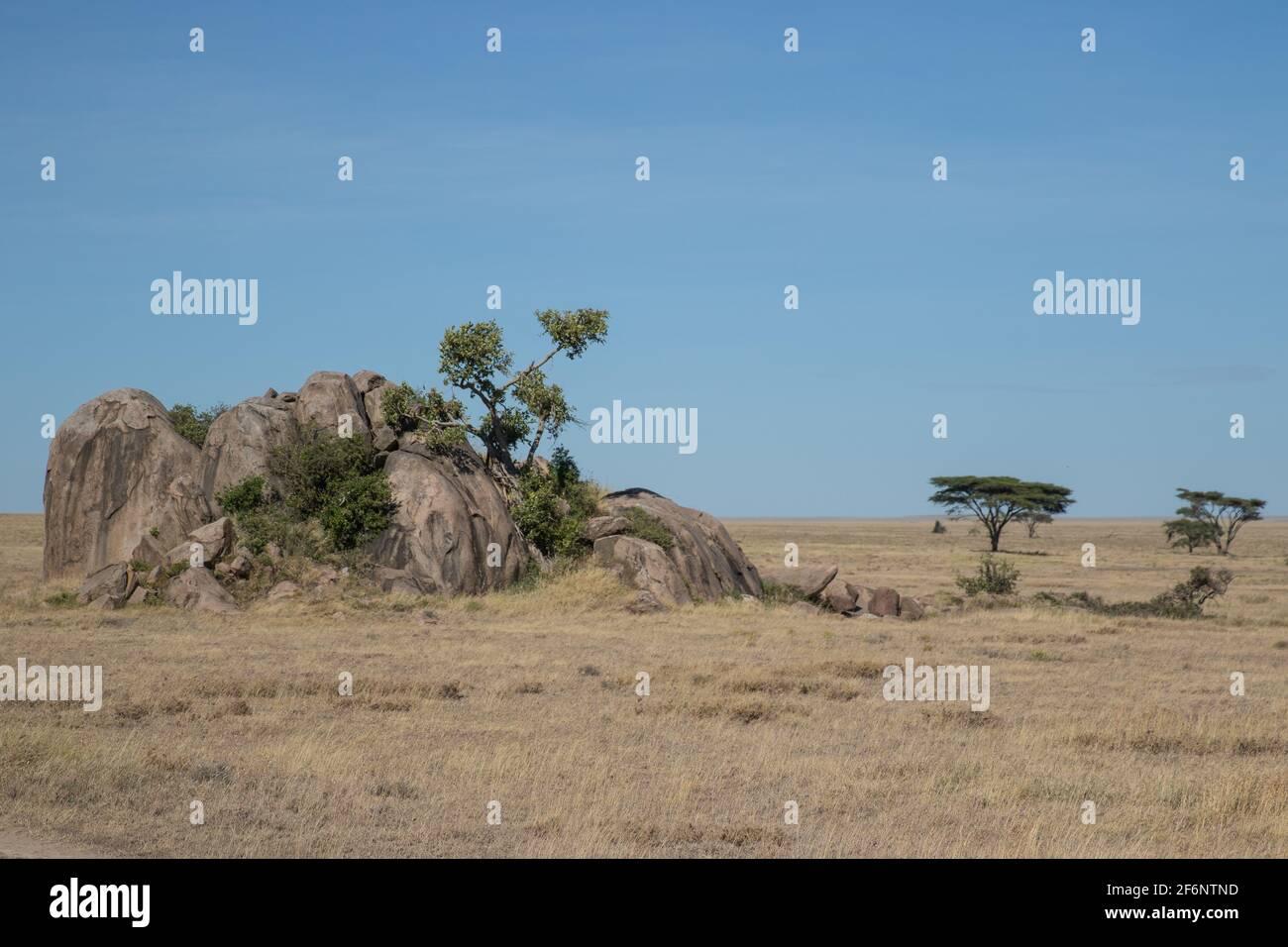 Paysage typique de Serengeti, Tanzanie. Banque D'Images