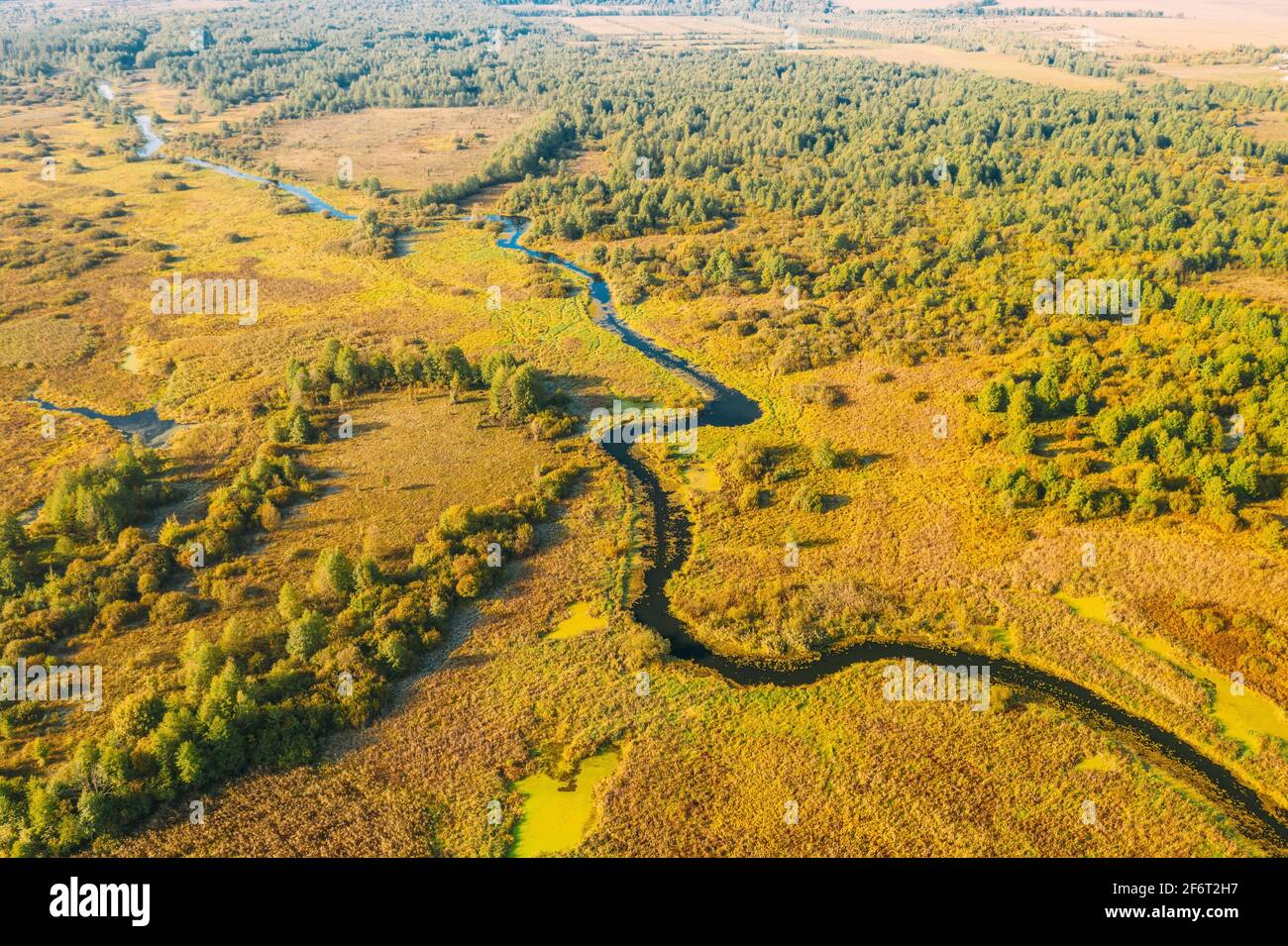 Vue aérienne Bois de la Forêt verte et paysage de la rivière en une journée ensoleillée d'été. Vue de dessus de la belle nature européenne de haute attitude en été. Banque D'Images