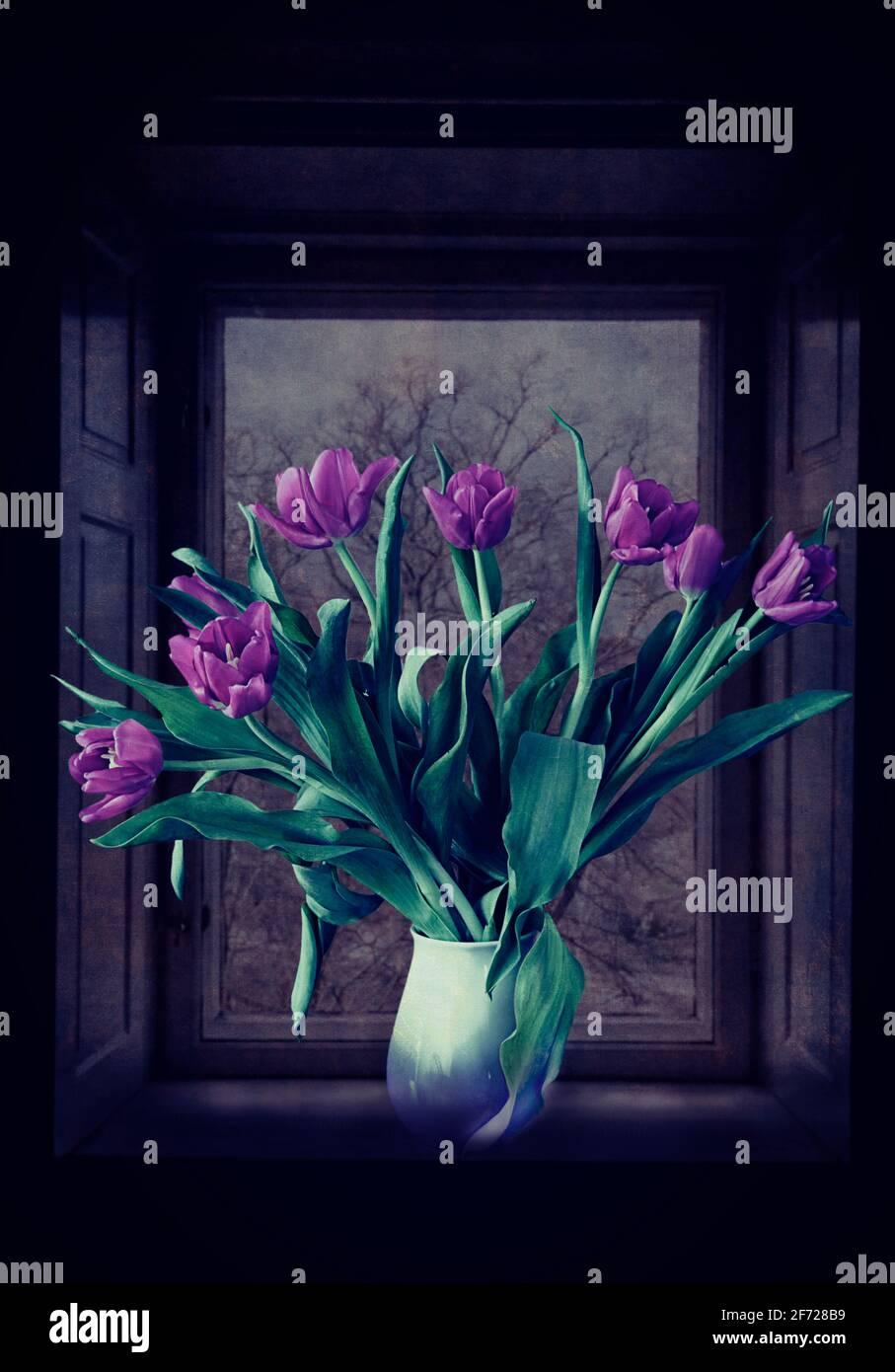 Encore la vie, bouquet de tulipes violettes sur le rebord de la fenêtre, avec la faible lumière d'un paysage d'hiver dehors Banque D'Images